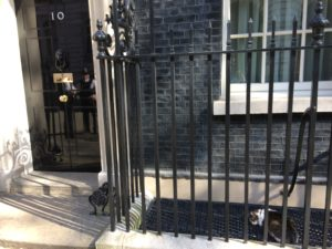 Cat outside 10 Downing St