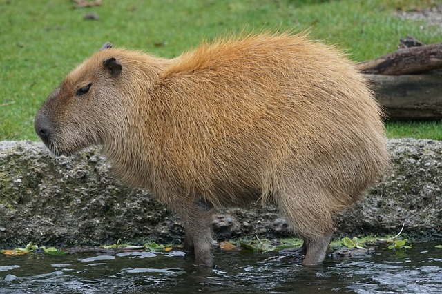 Capybara is live!  Latest Consentua release in production